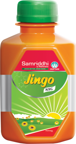Jingo NXG